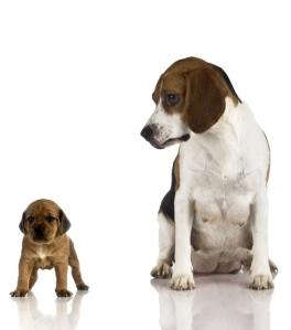 Petit et grand chiens