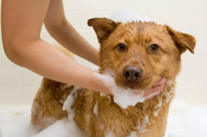Selfassurance : toilettage chien