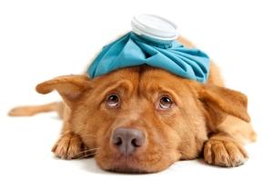 Santé des chiens - Selfassurance