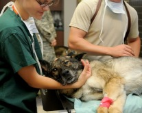 Selfassurance : urgence vétérinaires