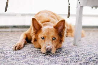 chien fatigué - Selfassurance