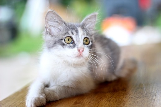 house-cat-281510_640
