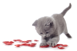 kitten and red decorative hearts