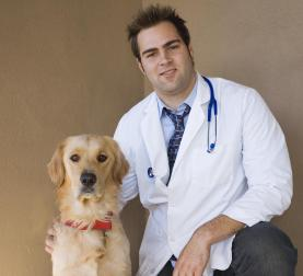 vet and retriever 3